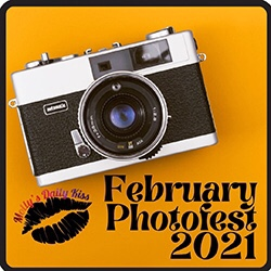 February  photo fest logo  including a picture of an old camera  over a mustard background